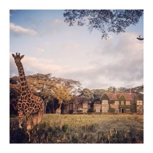 The Giraffe Manor al fondo